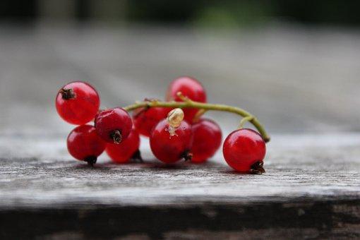 Currant, Snail, Red Currant, Fruit, Soft Fruit, Bush