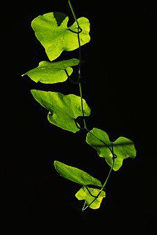 Leaves, Backlight, Leaf, Nature, Plant, Foliage, Bright