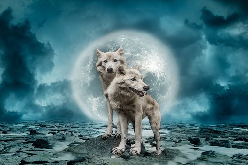 Wolves, Wolf, Predator, Full Moon, Clouds, Sky