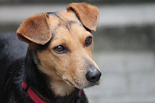Dog, Friend, Hybrid, Mixed Breed Dog, Animal, Pet