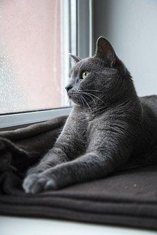 Cat, Feline, Kitten, Kitteh, Domestic, Furry, Fur