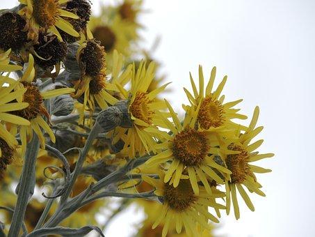 Flower, Yellow, Yellow Flower, Nature, Petals Yellow