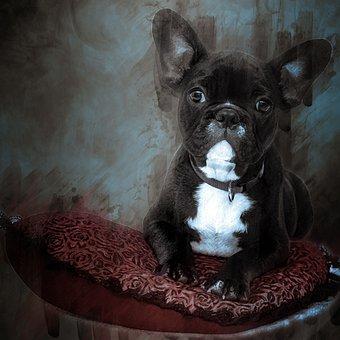 Bulldog, Puppy, Dog, Pet, Cute, Animal, Adorable