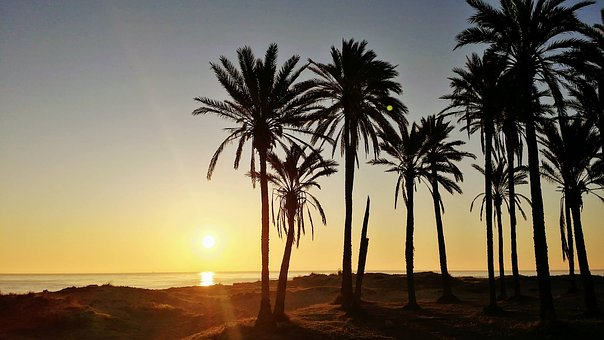 Spain, Palm Trees, Torrevieja, Vacations, Summer
