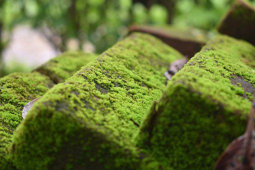 Moss, Mildew, Moist, Texture, Moldy, Pattern, Nature