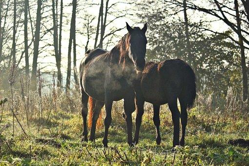 Horse, Rap, Mare, Autumn, Fog, Thoroughbred Arabian