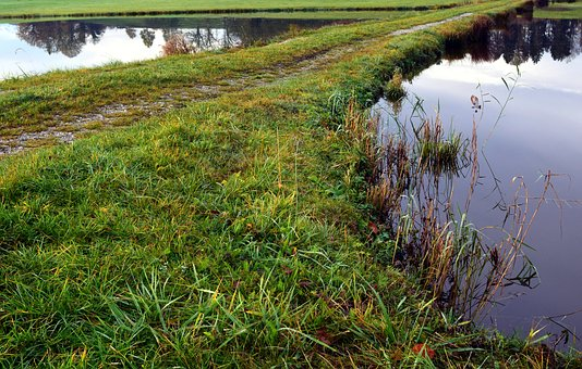 Dike, Dam, Water, Pond, Lake, Pools, Grass, Fouling