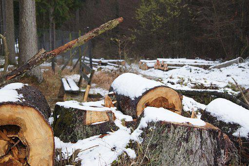 Wood, Tree, Winter, Log, Nature, Forester