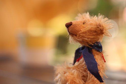 Bear, Teddy Bear, Teddy, Toy, Cute, Brown, Soft, Animal