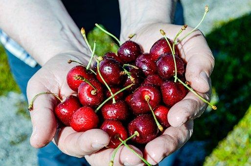Cherry, Drupe, Useful Plant, Fruit, Edible, Plant