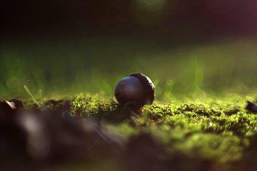 Acorn, Forest, Light, Polyana, Moss, Dashing, Autumn