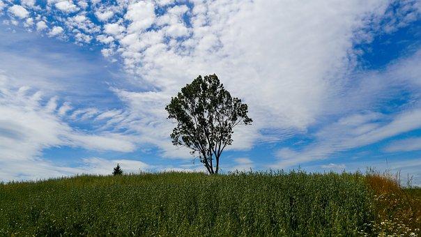 Tree, Field, Village, Nature, Plants, Sky, Landscape