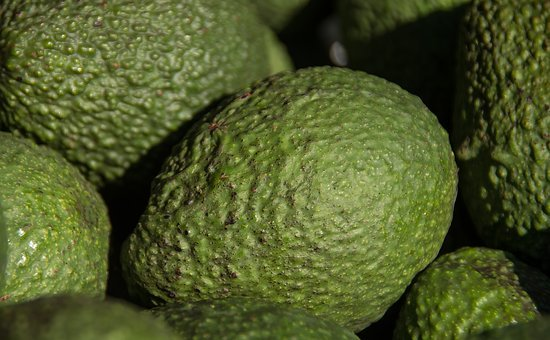Hass Avocado, Avocados, Fruit, Green, Harvest, Picked