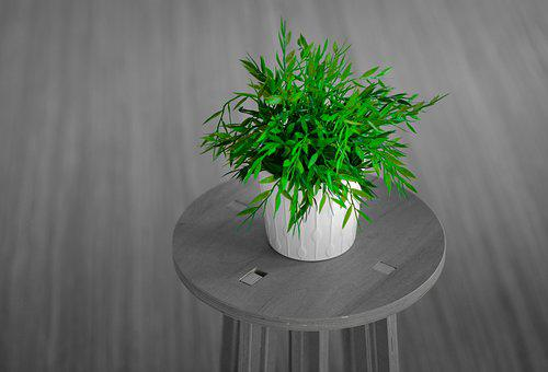 Plant, Room, Green, Home, Modern, Interior, Design