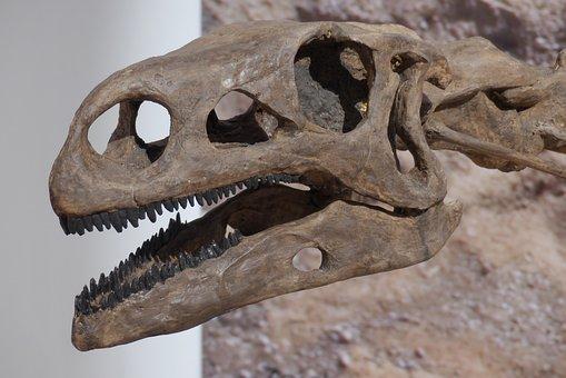Dinosaur, Bone, Skeleton, Hagbard, Giant Lizard, Museum