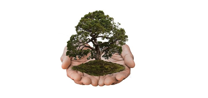 Nature, Tree, Nature Conservation, Hands, Presentation
