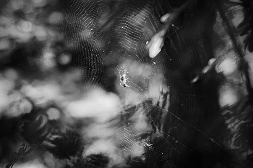Spider Web, Spider, Nature, Macro, Insects, Summer