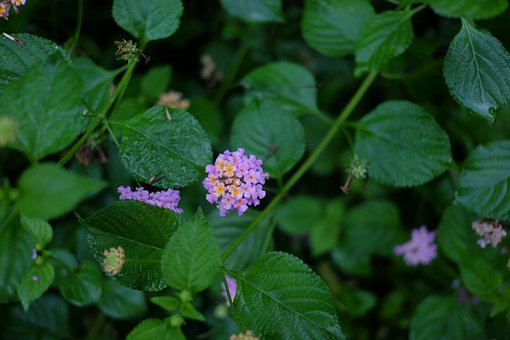Wild Flower, Purple, Nature, Wild, Plant, Summer