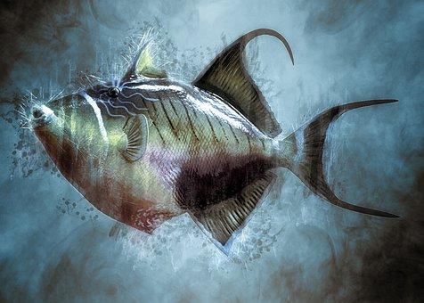 Colorful, Trigger Fish, Fish, Taxidermy, Mount, Marine
