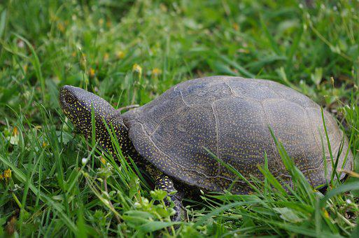 Tortoise, Living Nature, Animals, Nature, Turtle, Shell