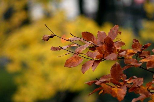 Autumn, Park, Tree, Nature, Autumn Gold, Foliage