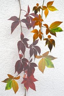 Nature, Autumn, Mood, Golden Autumn, Leaves