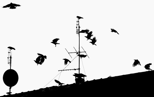 Crow, Ravens, Birds, Flight, Fly, Fear, Contrasts, Roof