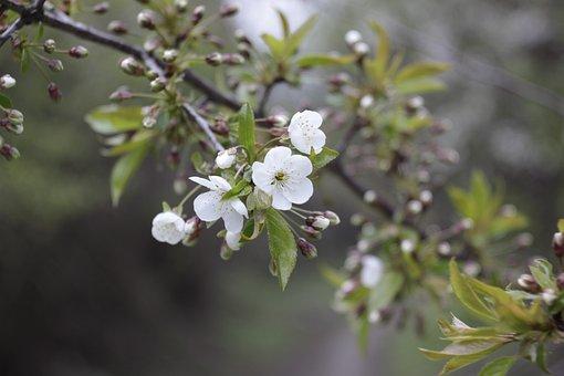 Dacha, Macro, Summer, Plant, Nature, Garden, Closeup