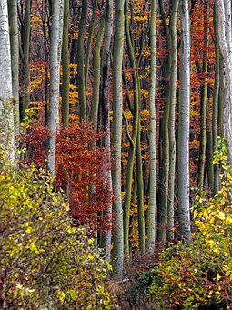 Autumn, Autumn Forest, Autumn Mood, In The Autumn