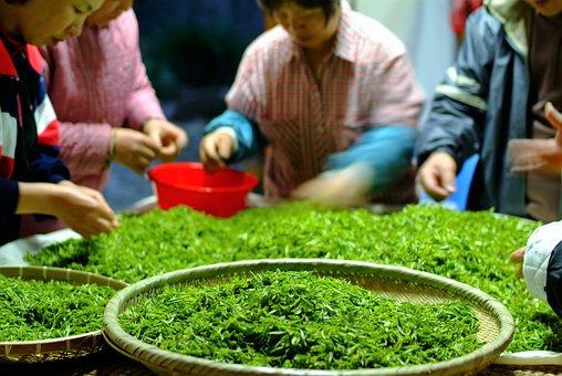 Tea, Selected Work, Jiri Natural Green Tea, We Still