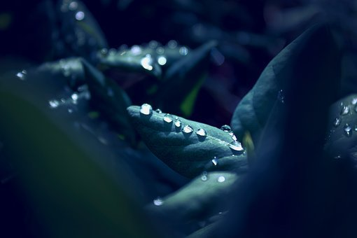 Raindrop, Leaf, Macro, Close, Mirroring, Nature, Green