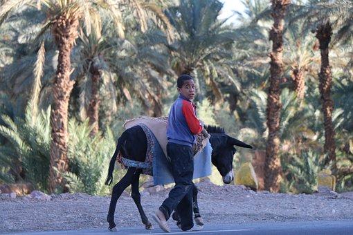 Morocco, Wilderness, Boy, Donkey, Animal, Palm Trees