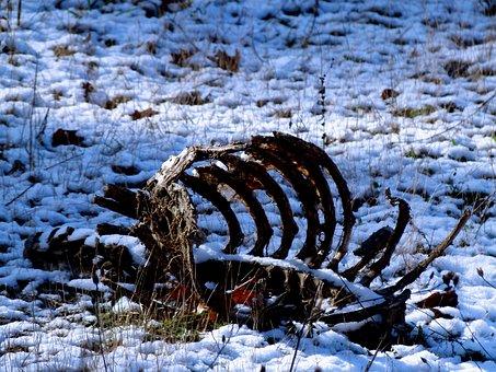 Carcase, Bones, Deer, Snow