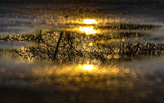 Water Puddle, Mirroring, Reflection, Tree, Aesthetic