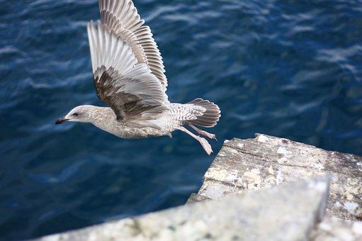 Flight, New, Seagull, Emergency, Beach, Sea