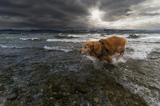 Animal, Dog, Pet Photography, Pet, Cute, Race