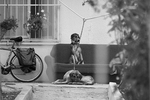 Dogs, Home, Innocent, Cute, Documentary, Garden
