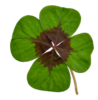 Four-leaf Clover, Luck, Green, Nature