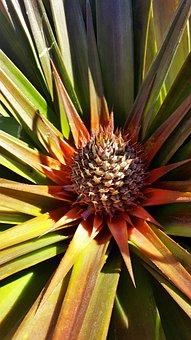 Plant, Flower, Pineapple, Life, Nature, Spring, Flowers