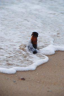 Beer, Sea, Beach, Water, Sand, Alcohol, Holiday, Bottle