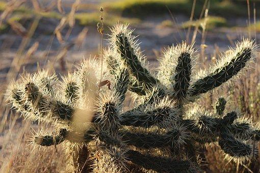 Cactus, Hidalgo, Tailings, Thorns, Desert, Arid