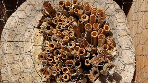 Structure, Tree Grates, Wild Bees, Hibernation Help