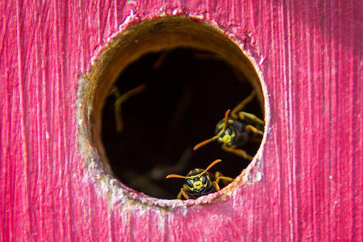 Wasp, The Hive, Insect, Nest, Animal, Sting, Close Up