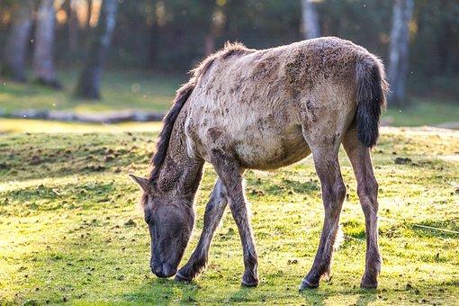 Brumby Horses, Wild Horses, Horse Herd, Horse, Foal