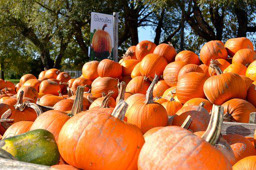 Pumpkin, Pumpkin Patch, Autumn, Fall, Orange, Halloween