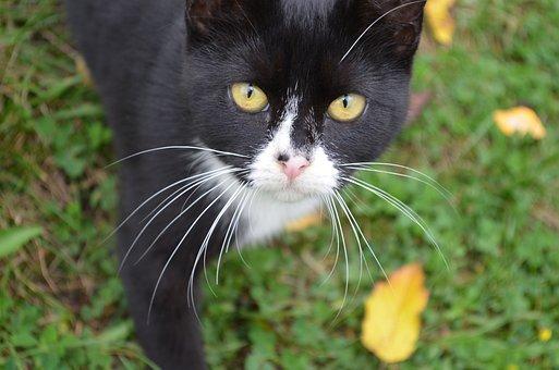 Cat, Feral, Feline, Animal, Pet, Fur, Kitty, Stray