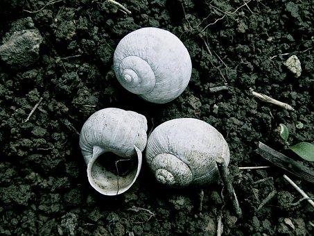 Shell, Snail Shells, Nature, Snail, Close, Snail Shell