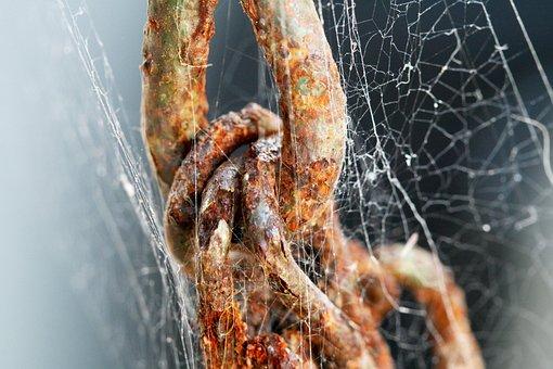Chain, Cobweb, Rust, Aged, Weathered, Deteriorate