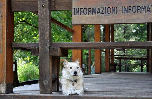 Dog, Reception, Guardian, Dog Model