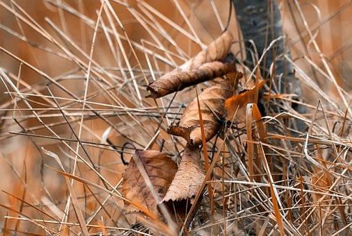 Fall, Leaf, Autumn Leaves, Dead Leaf, Leaves, Nature
